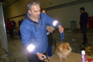 Марин Петров подготвя померанчетата за състезанието