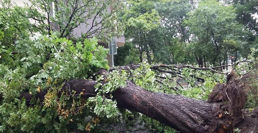 """Бурята изкорени голямо дърво на ул. """"Леонардо да Винчи""""5"""
