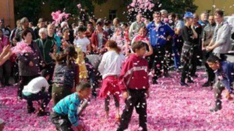 Производители от Карловско разпръснаха тонове розов цвят в петък