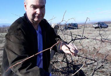 Д-р Веселин Герев твърди, че разбира от лозарство и винарство.