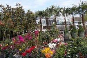 """Петметровите палми и магнолии са един от хитовете в тазгодишното издание на """"Цветна пролет"""" novini-plovdiv-press"""