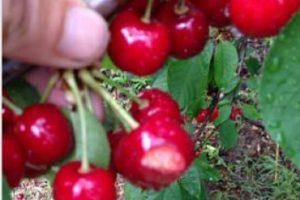 Работата в селското стопанство няма да пречи на социалните помощи
