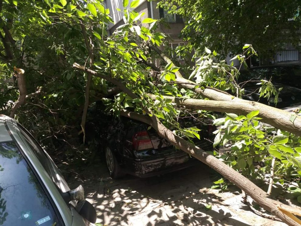 Дървото е премазало колата.