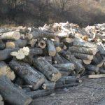 Прогноза: Дървата за огрев ще поскъпнат
