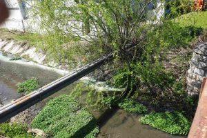 Преустановено е замърсяването на Черна река от мандрата в Маноле