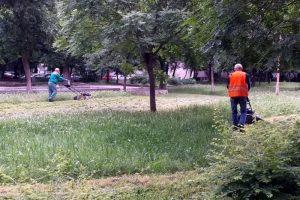От Градини и паркове обещават, че само за ден ще окосят парка.