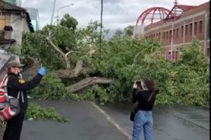 Близо 100 дървета са повалени след стихията