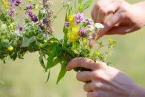 Днес билките са най-лековите