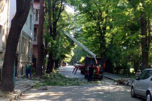 """Работници на """"Градини и паркове"""" разчистват короните на дърветата."""