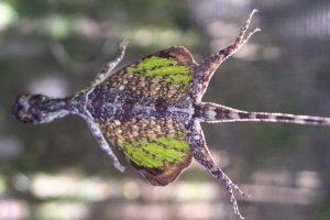 Екзотични летящи животни показват в музея