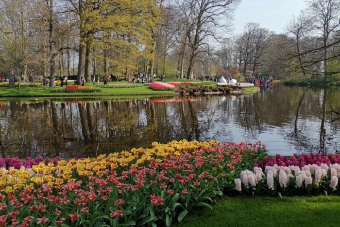 """Още малко холандска красота от парка ,,Койкенхоф"""""""