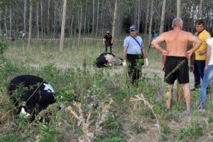 Трупове на крави край река Марица. Кадър: БТА