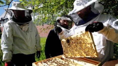 Пчеларите имат защита срещу COVID-19