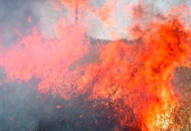 Изрично се забранява паленето на стърнища, глобите са до 2000 лв.