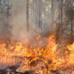 Огънят се е прехвърлил в близката гора, снимката е илюстративна