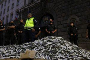 Замразената риба пред МС. Кадър: БГНЕС
