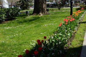 Започва пръскане срещу комари в Пловдив