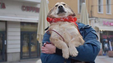 """Така наречената """"такса куче"""" се заплаща в съответното районно кметство"""
