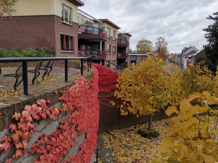 Цветове и шарки в Холандия