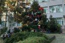 Уникалната елха в двора на Спортното училище