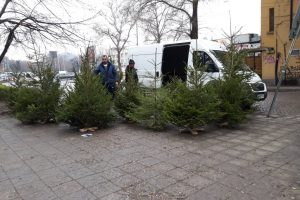 Коледни елхи в Пловдив