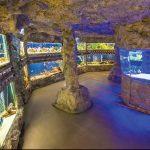 Природонаучният музей ще приема до 30% от максималния брой посетител