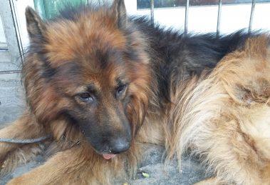 70 кучета са регистрирани в Асеновград от началото на годината.