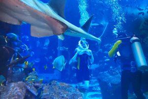 Даниела с подводна фотосесия между акулите