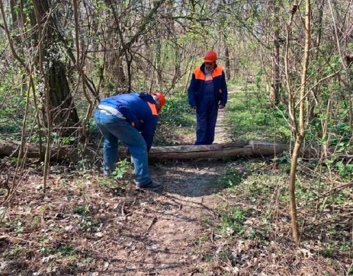 """След сигнали на граждани за паднали при последната буря дървета на Гребната база екипи на """"Градини и паркове"""" разчистват екопътеките"""