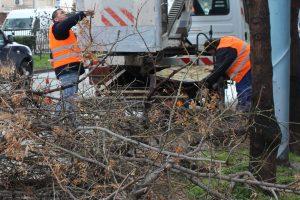 Разчистването на паднали дървета и клони продължава.